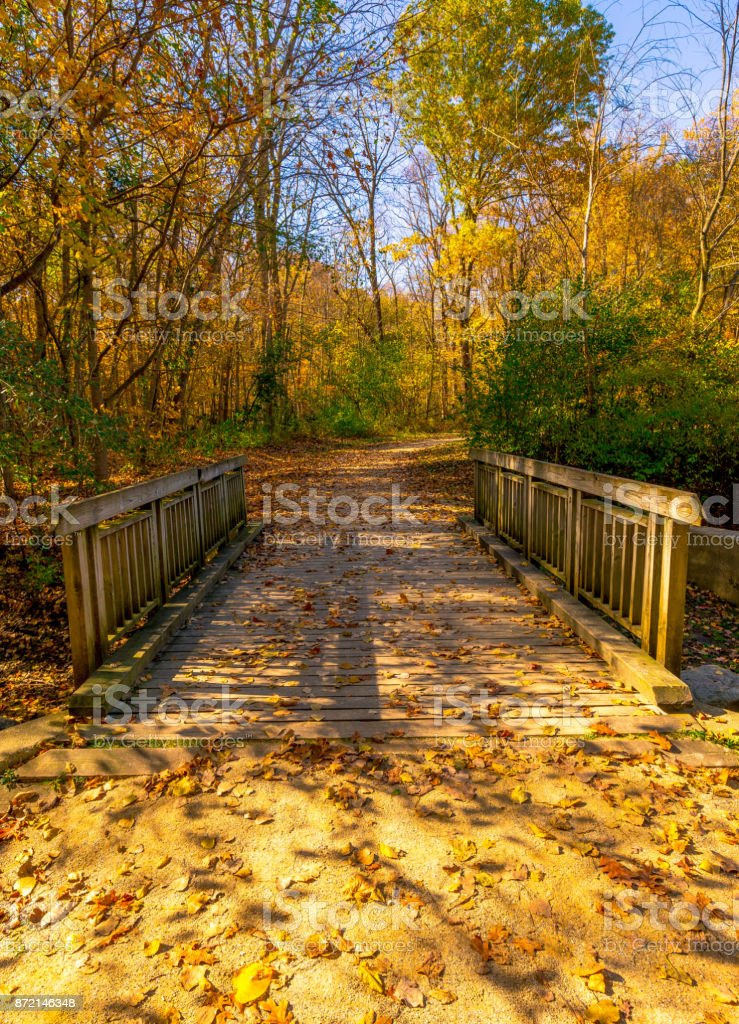 Fall colors in the forest preserve stock photo