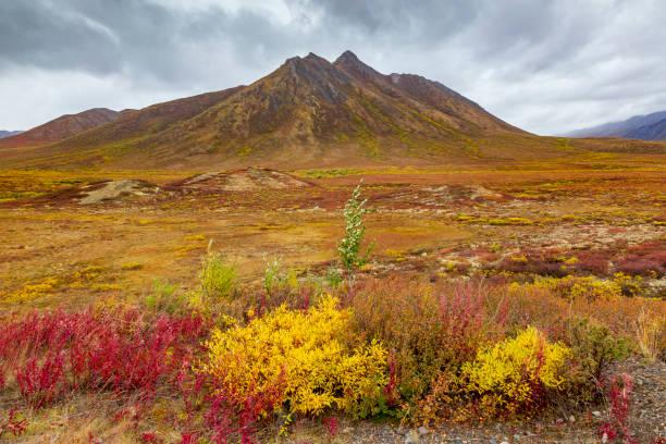 farben des herbstes in der tundra, in tombstone-nationalpark. yukon, kanada - revierverhalten stock-fotos und bilder