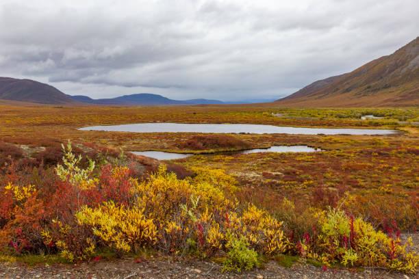 廃棄 (tombstone) 国立公園のツンドラの紅葉。ユーコン準州、カナダ - ツンドラ ストックフォトと画像