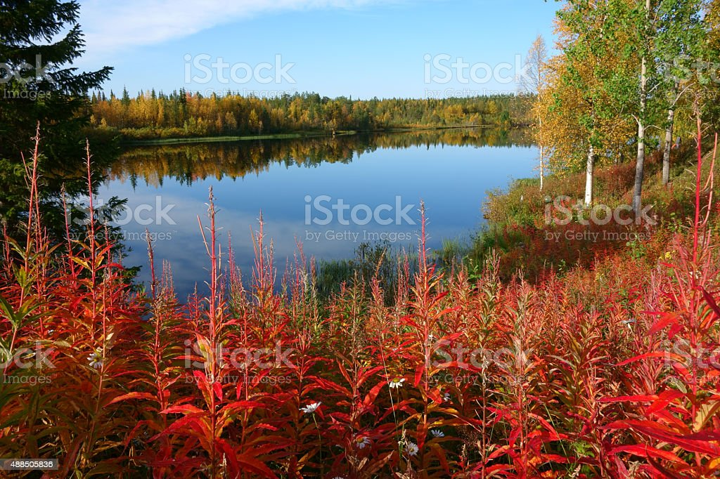 fall colors, lapland stock photo