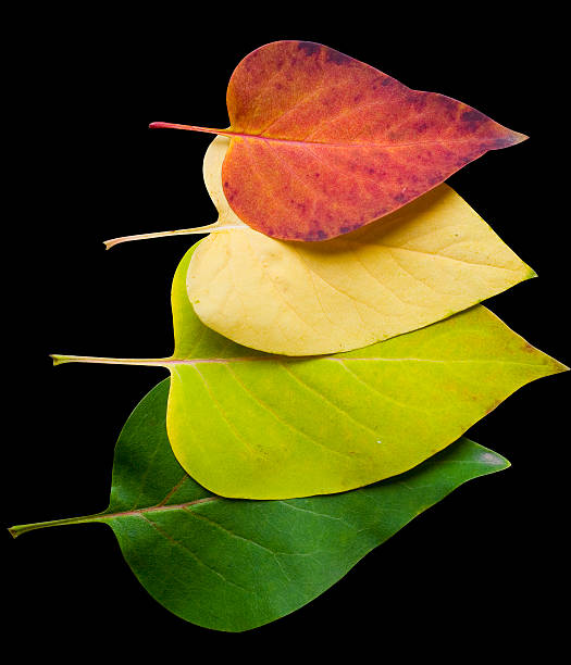 Fall Colors - Leaves stock photo
