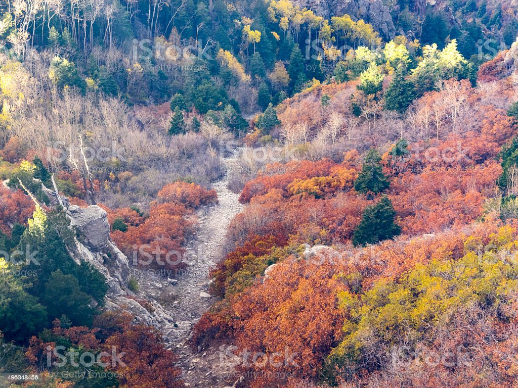 Fall Colors looking into New Mexico Ravine Dry Creek Bed stock photo
