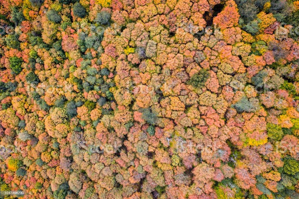 AERIAL Herbstfarben eines Waldes in der Herbstsaison, Quebec, Kanada – Foto