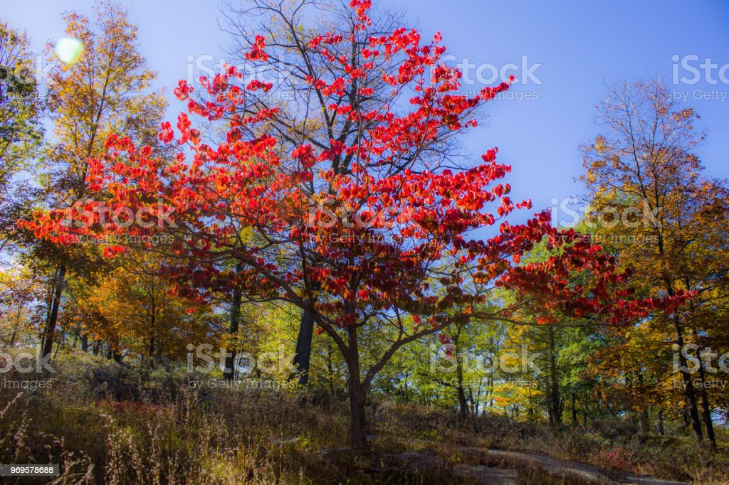 Fall Colors of Harriman State Park, NY stock photo