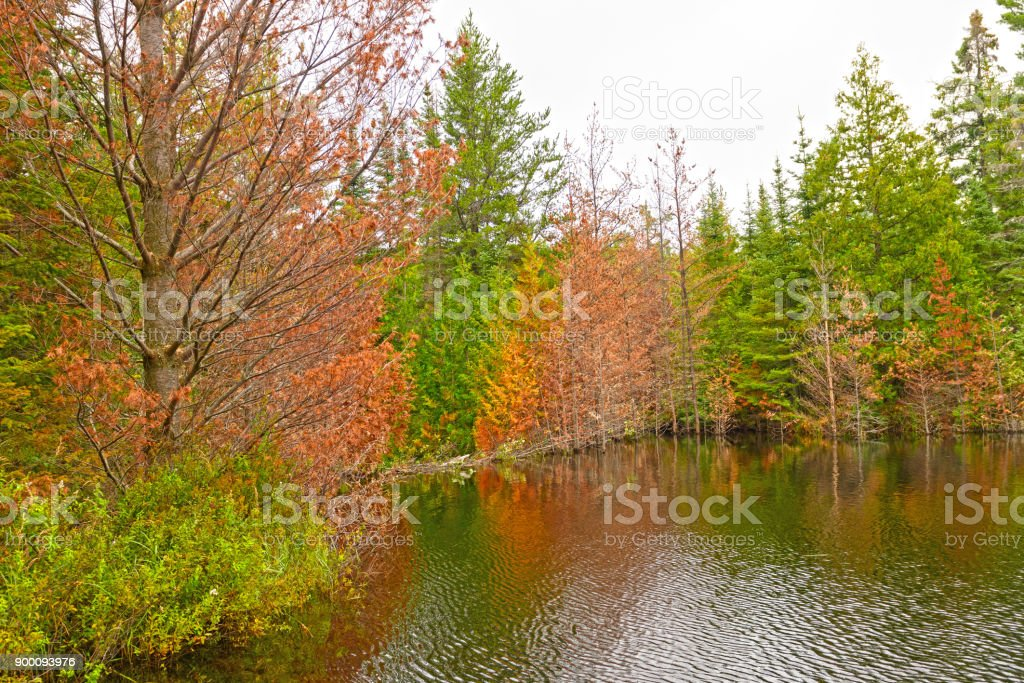 Fall Colors on a Lake Flooded by a Beaver Dam stock photo