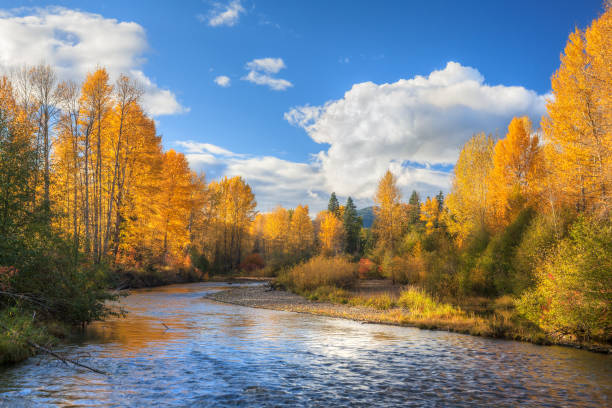 Fall colors on Snoqualmie River stock photo
