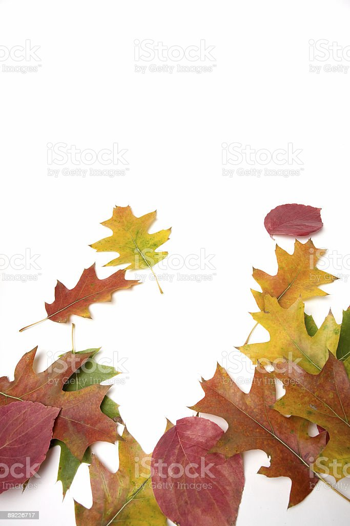 Fall Colors on White background royalty-free stock photo