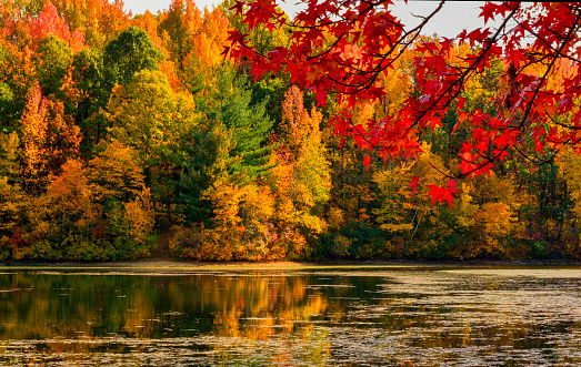Fall foliage at Dallabach Lakes in East Brunswick, New Jersey.