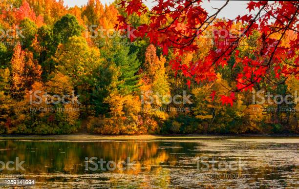 Photo of Fall Colors