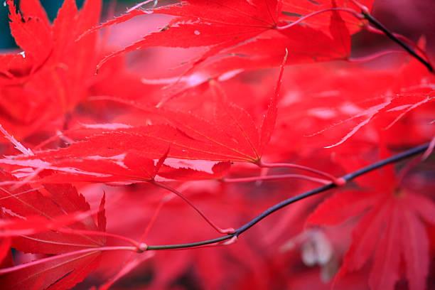 Herbstfarben – Foto