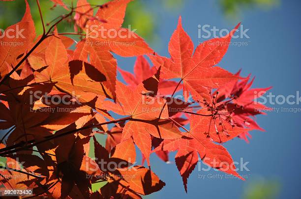 Fall Colors Stock Photo - Download Image Now
