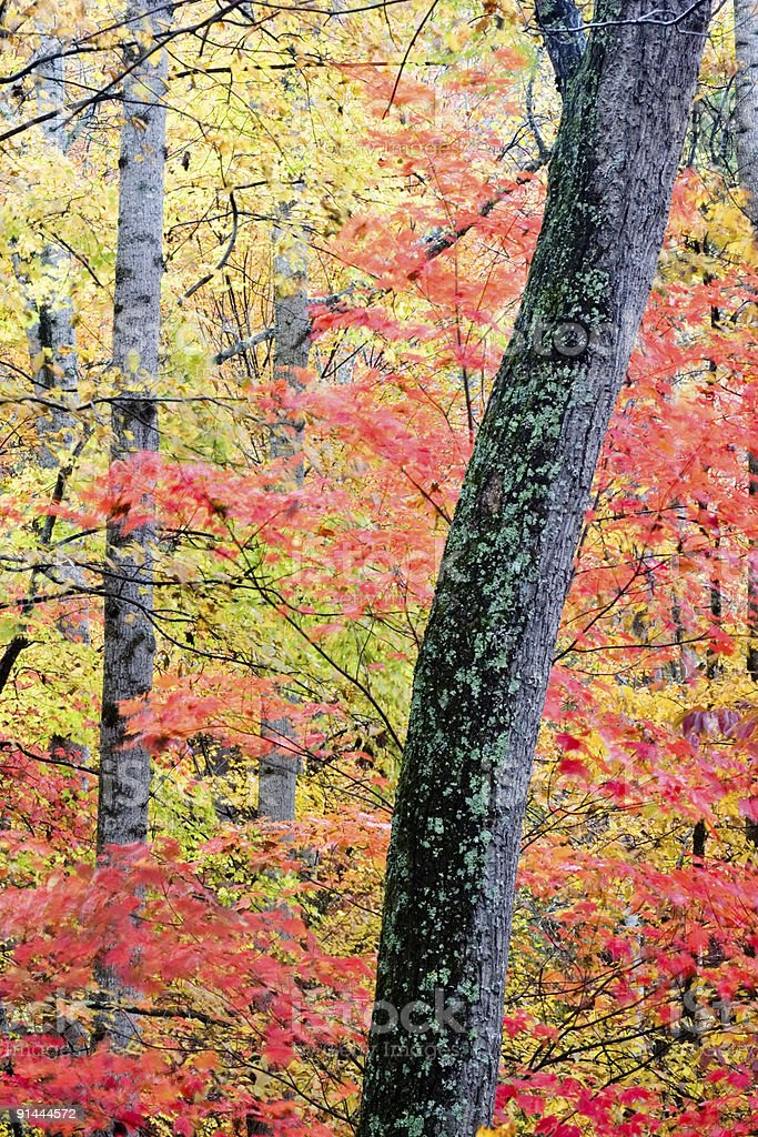 Fall Colors royalty-free stock photo