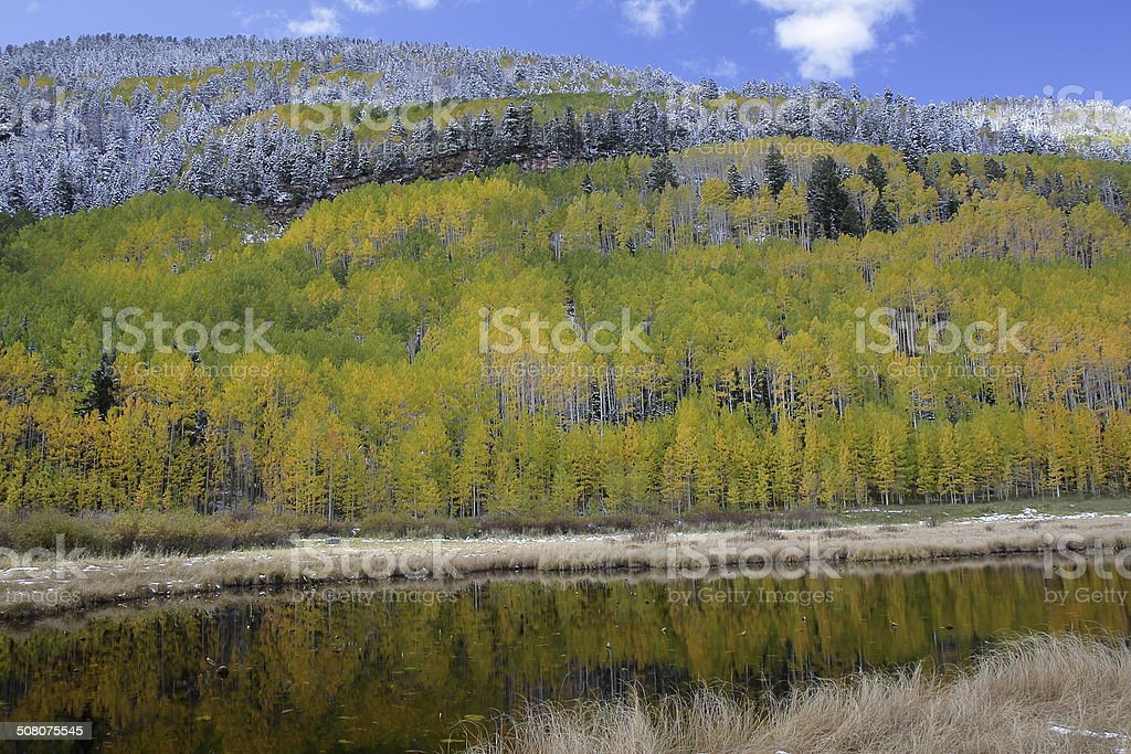 Fall Colors Reflected in a Pond, San Juan Mountains, Colorado royalty-free stock photo