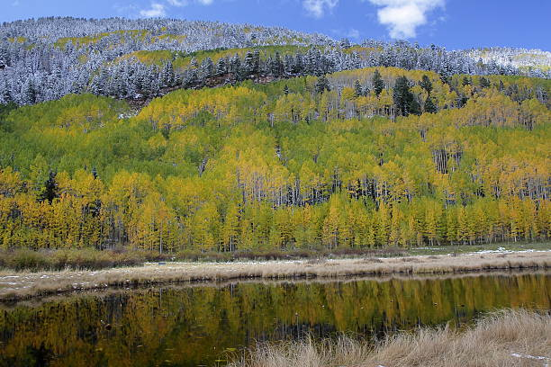 Fall Colors Reflected in a Pond, San Juan Mountains, Colorado stock photo