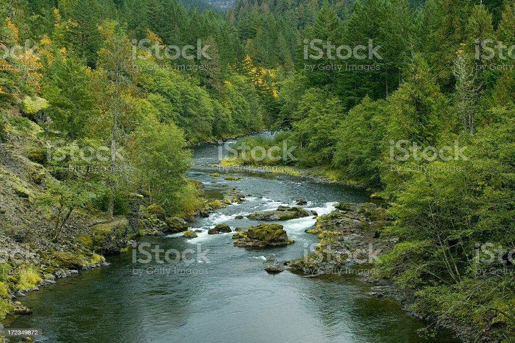 Los colores del otoño en torno al río Clackamas cerca de Estacada, Oregon foto de stock libre de derechos