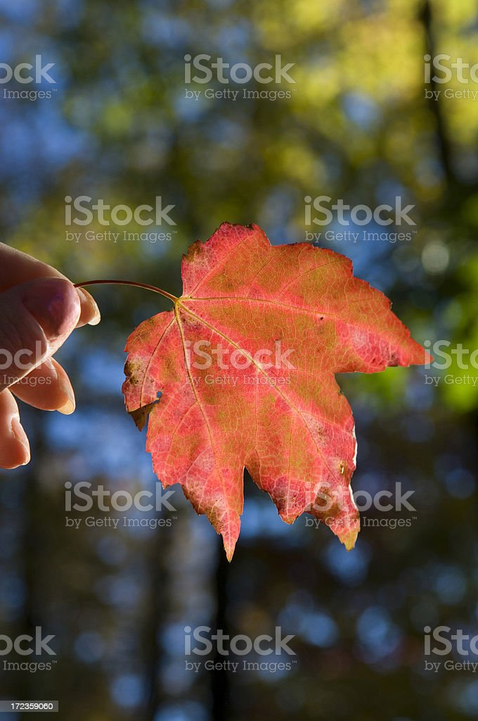 Fall colors, West Virginia royalty-free stock photo