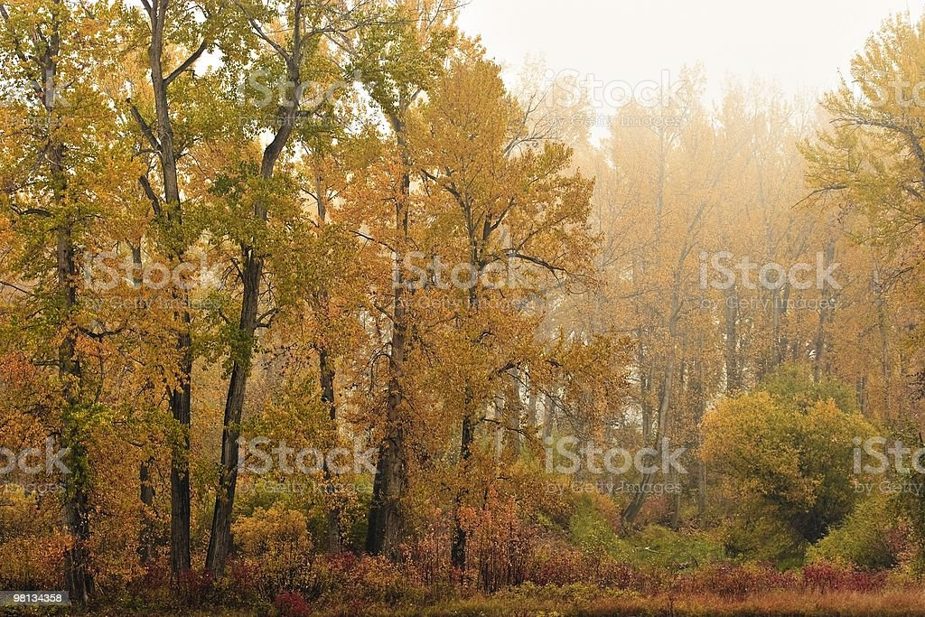 Fall colour and mist royalty-free stock photo