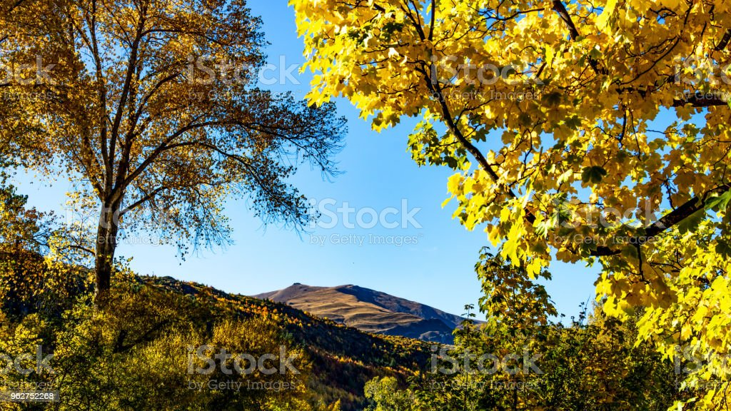 Fall colours in the trees - foto stock