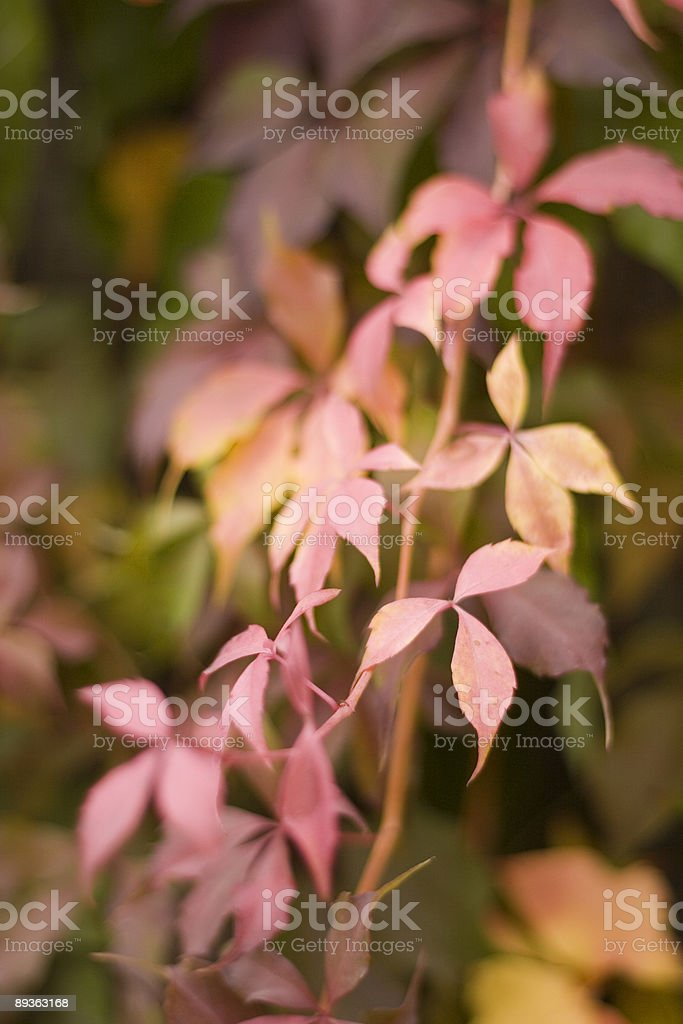 Jesienne kolory liście. zbiór zdjęć royalty-free
