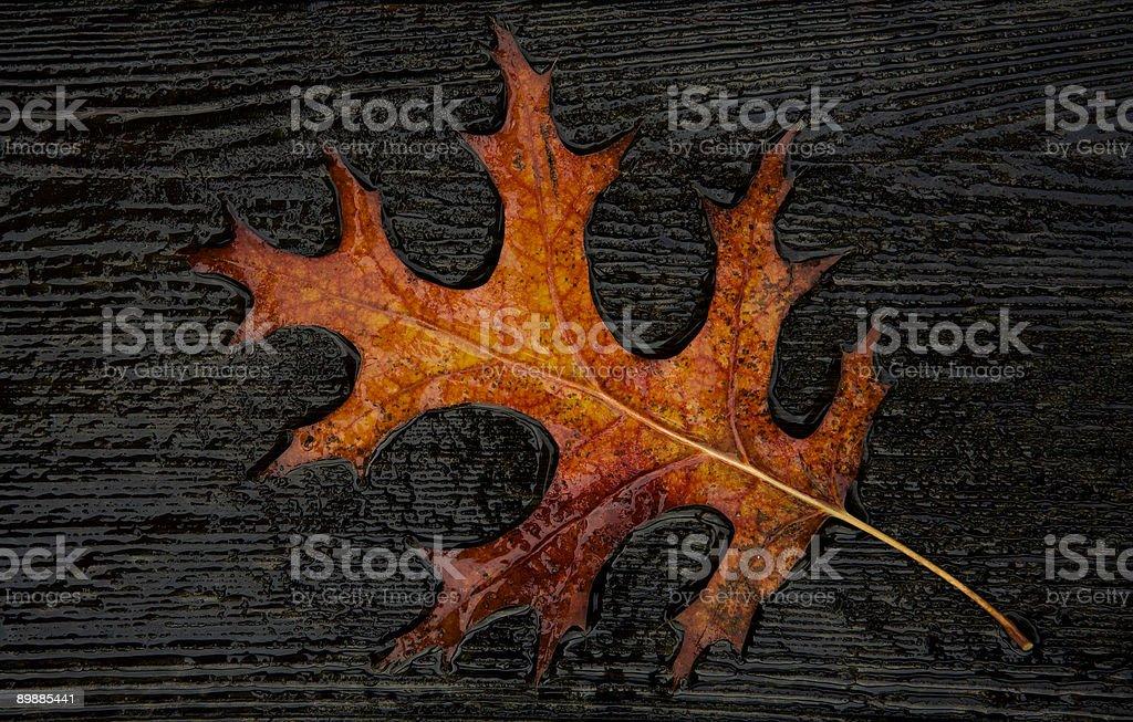Couleurs de l'automne de Napa photo libre de droits