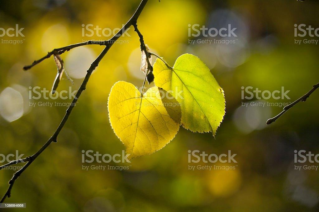 fall comes stock photo
