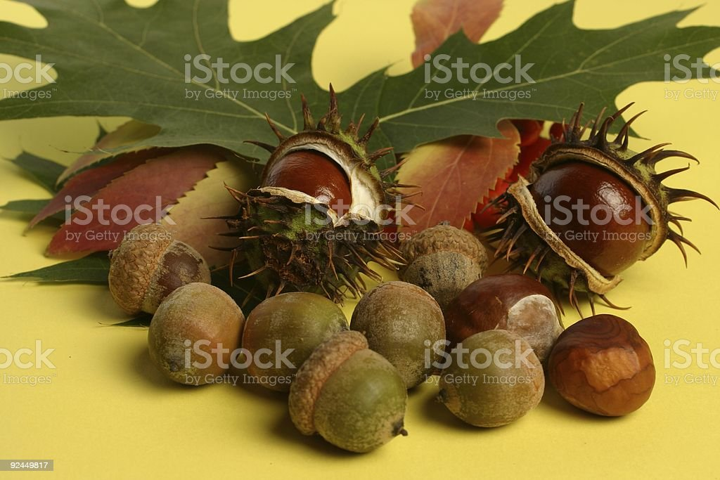 Fall composition royalty-free stock photo