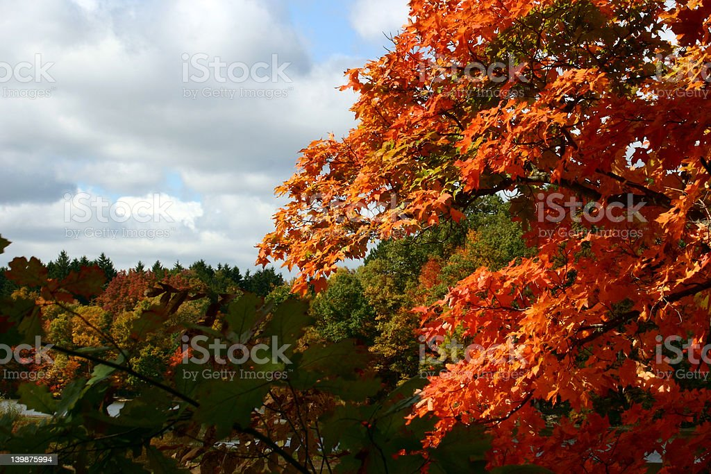 Fall Contrasts royalty-free stock photo