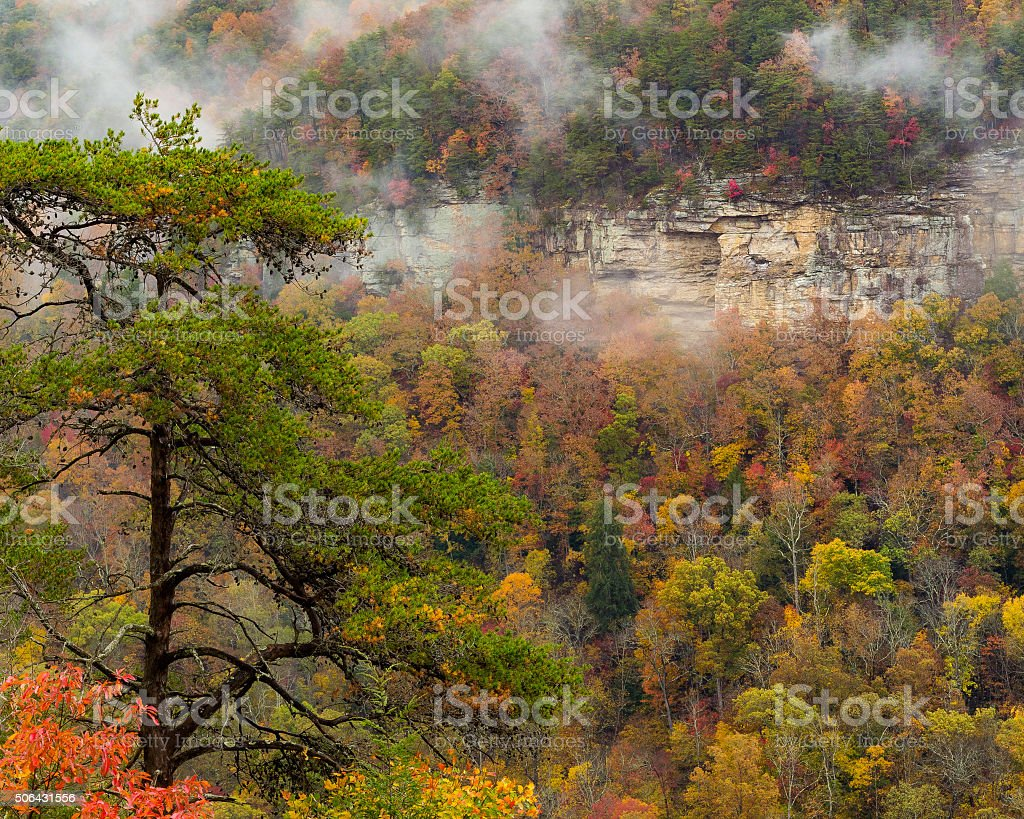 Fall Creek Falls Tree and Cliff stock photo