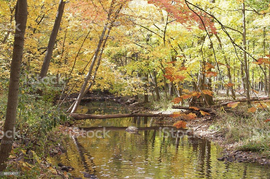 fall creek - Royalty-free Ağaç Stok görsel