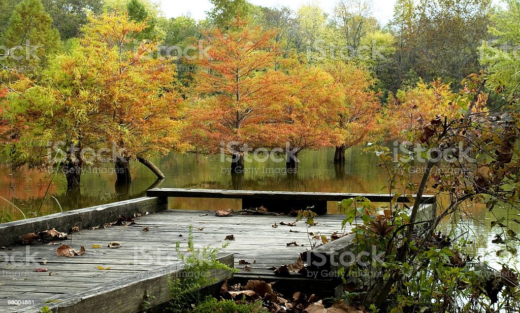 Fall Cypress Tree Reflection at Fishing Pier royalty-free stock photo