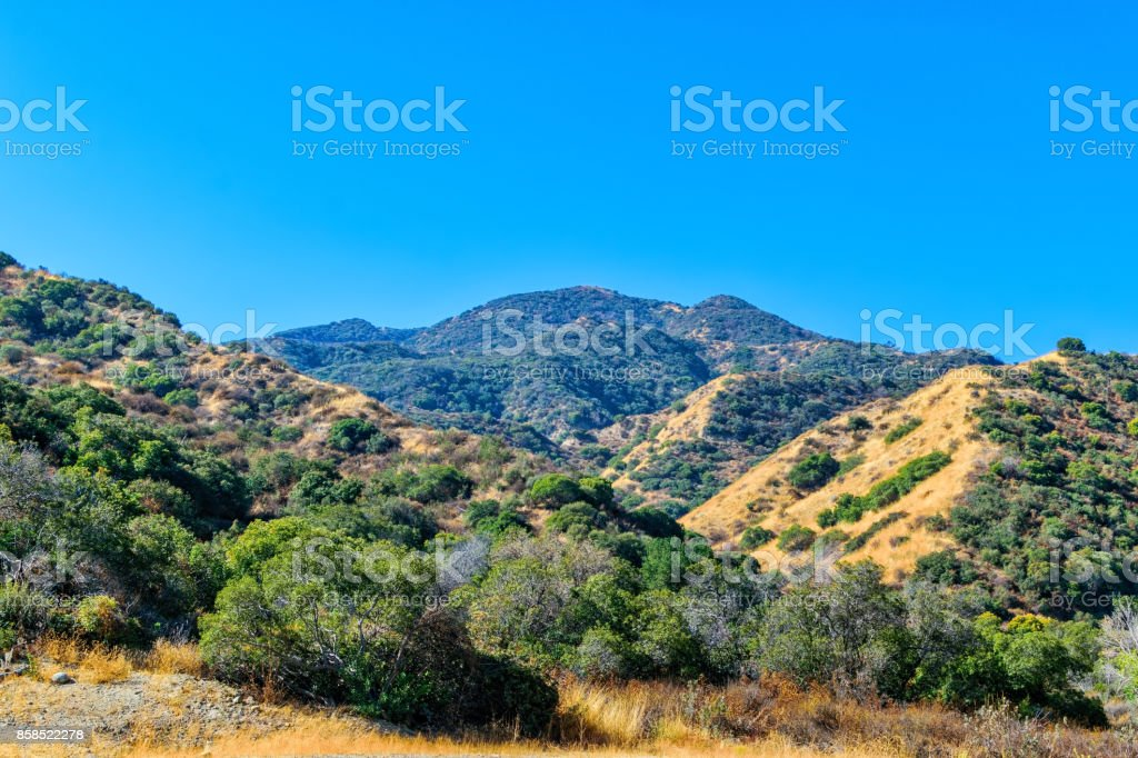 Fall dry forest conditions stock photo