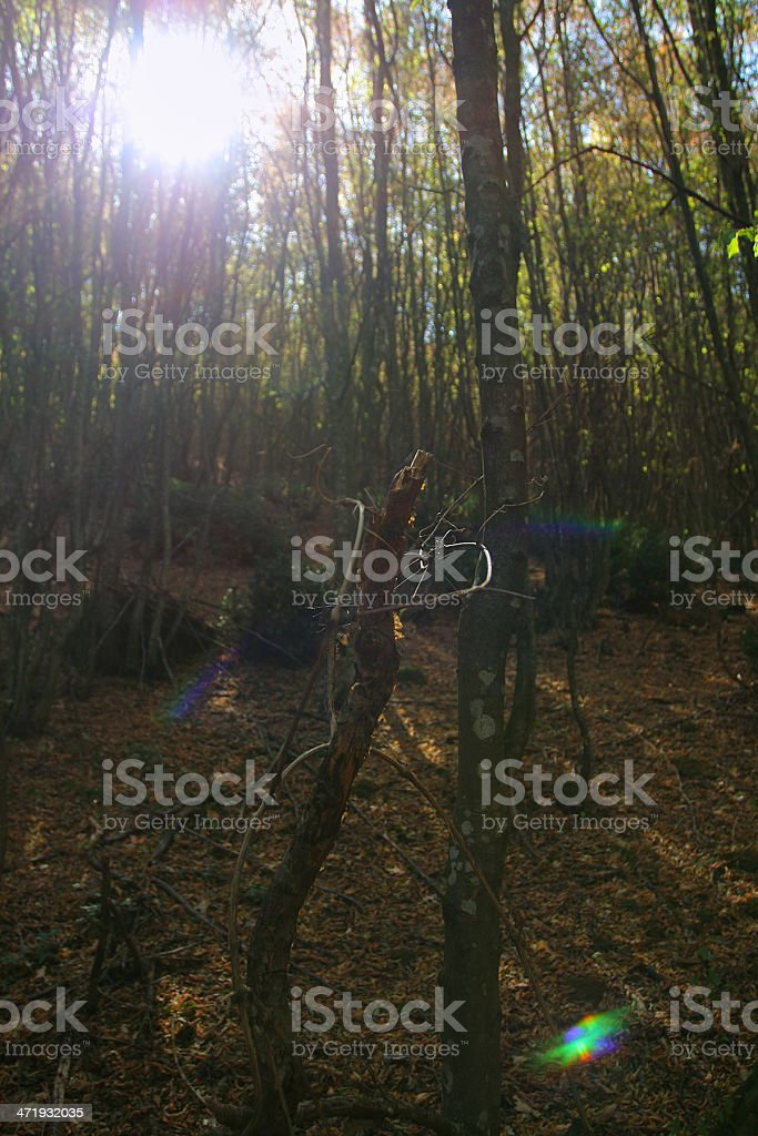 Fall flare forest royalty-free stock photo