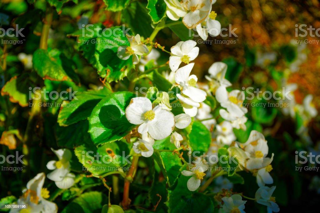 Photo libre de droit de Fleur Dautomne Blossoming Fleurs Dans Un ...