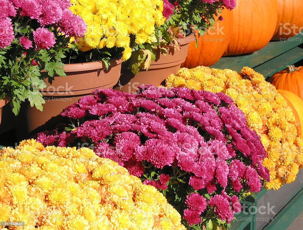 Fall Flowers and Pumpkins royalty-free stock photo