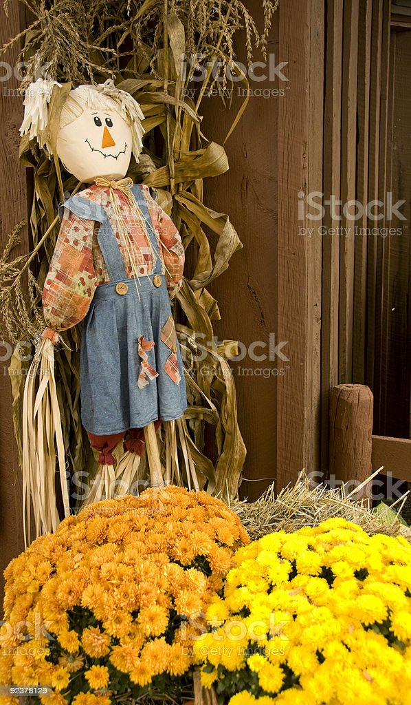 Fall flowers and scarecrow doll royalty-free stock photo