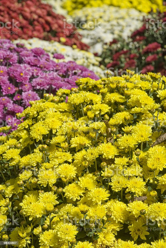 Fall Flowers Background royalty-free stock photo