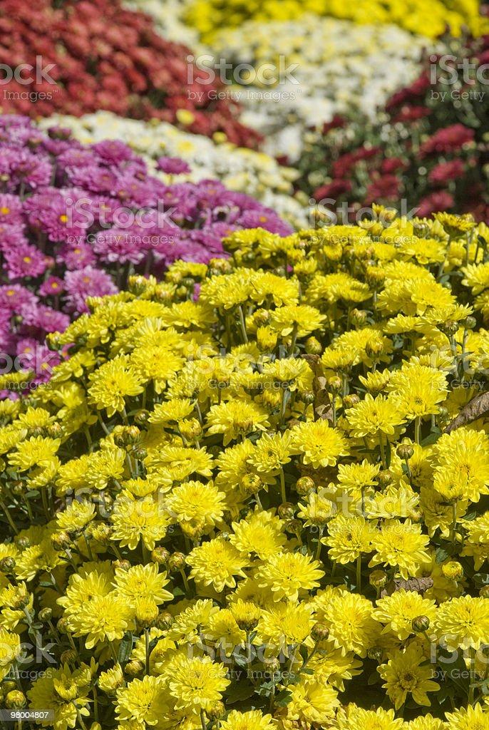 Outono fundo de flores foto royalty-free