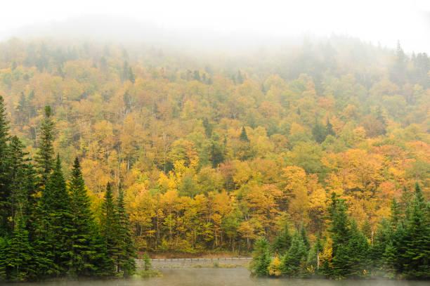 fall gebladerte en mist - dixville notch stockfoto's en -beelden