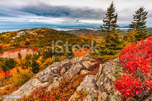 Orange red and yellow colors of the trees and plants in Acadia National Park in October