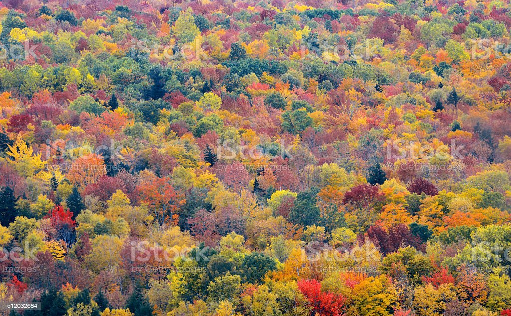 fall foliage background stock photo more pictures of abstract istock
