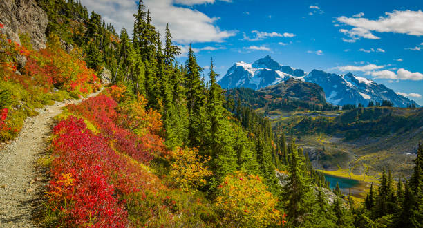 Fall foliage, Chain lakes trail, Mt Baker, Washington st Fall foliage, Chain lakes trail, Mt Baker, Washington st washington state stock pictures, royalty-free photos & images