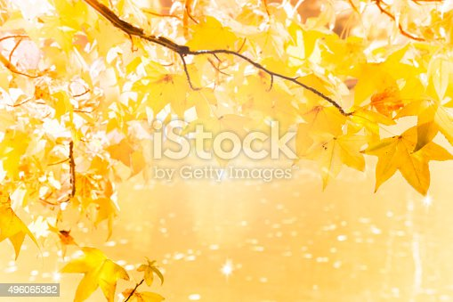 istock Fall foliage in a forest 496065382