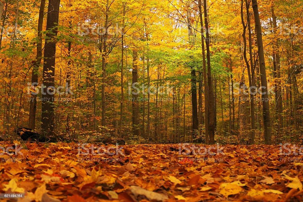 Fall Foliage in Cleveland photo libre de droits