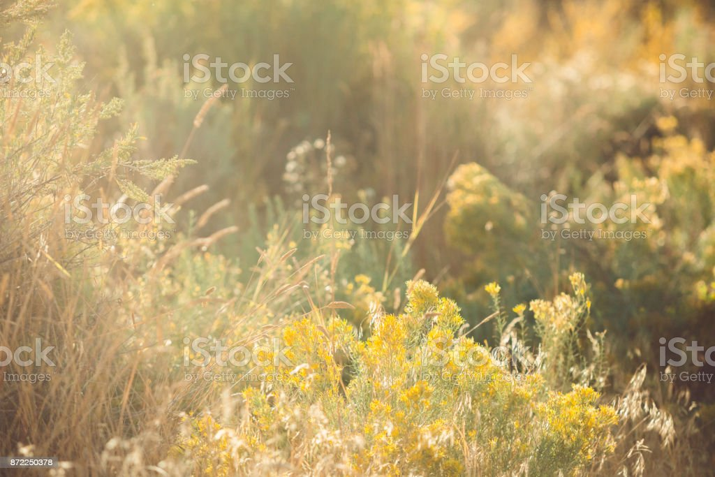 Fall Foliage In Golden Sunlight stock photo