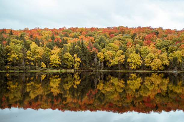 Fall foliage landscape. stock photo