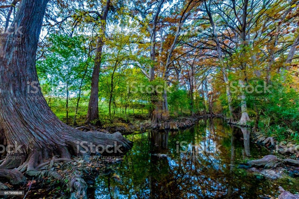 Fall Foliage on Cibolo Creek, Texas. stock photo