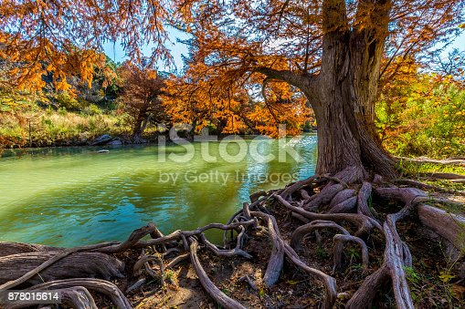 Bright Orange Fall Foliage and Entangled Cypress Roots on the Guadalupe River at Guadalupe State Park, Texas
