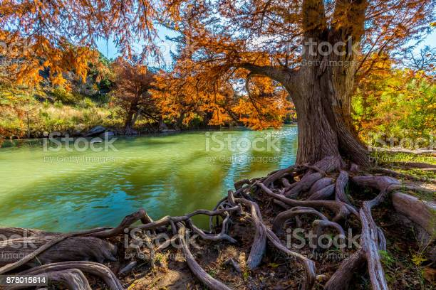 Photo of Fall Foliage on the Guadalupe River at Guadalupe State Park, Texas