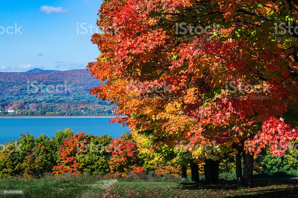 fall foliage on the river stock photo