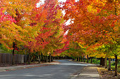 Fall foliage on tree lined street in suburban neighborhood in autumn USA America